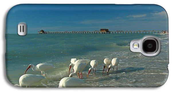 Feeding Photographs Galaxy S4 Cases - White Ibis near Historic Naples Pier Galaxy S4 Case by Juergen Roth