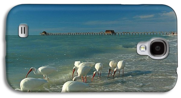 Fun Photographs Galaxy S4 Cases - White Ibis near Historic Naples Pier Galaxy S4 Case by Juergen Roth