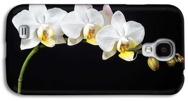 Interior Still Life Photographs Galaxy S4 Cases - White Orchids Galaxy S4 Case by Adam Romanowicz