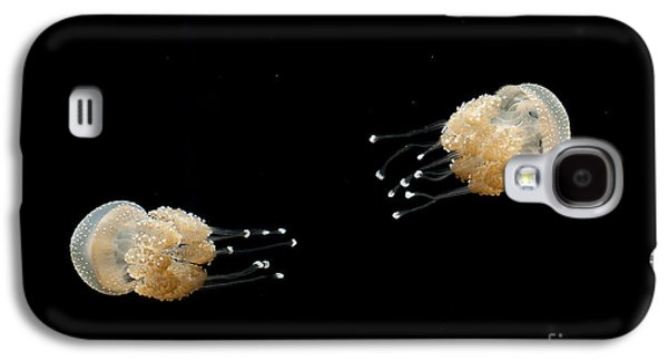 Jelly Fish With Dots Galaxy S4 Cases - White Spotted Jelly Fish from Austrailia Galaxy S4 Case by Artist and Photographer Laura Wrede