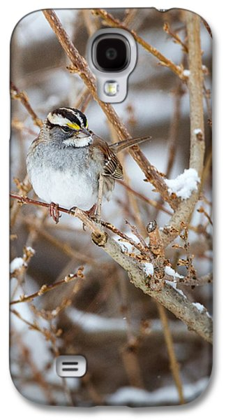 Sparrow Galaxy S4 Cases - White Throated Sparrow Portrait Galaxy S4 Case by Bill  Wakeley
