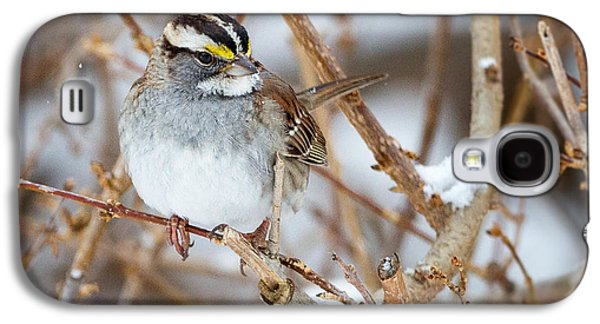 Sparrow Galaxy S4 Cases - White Throated Sparrow Portrait Square Galaxy S4 Case by Bill  Wakeley