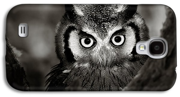 Intense Galaxy S4 Cases - Whitefaced Owl Galaxy S4 Case by Johan Swanepoel