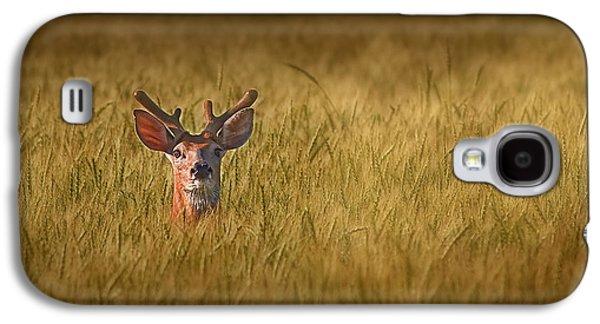 Whitetail Deer In Wheat Field Galaxy S4 Case by Tom Mc Nemar