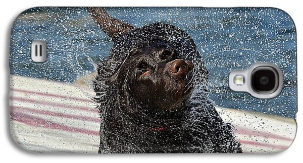 Chocolate Labrador Retriever Galaxy S4 Cases - Whole Lot Of Shaking Going On 4 Galaxy S4 Case by Fraida Gutovich