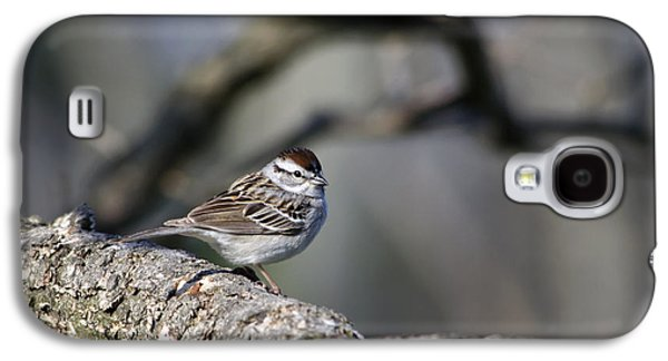 Sparrow Galaxy S4 Cases - Wild Bird - Chipping Sparrow Galaxy S4 Case by Christina Rollo