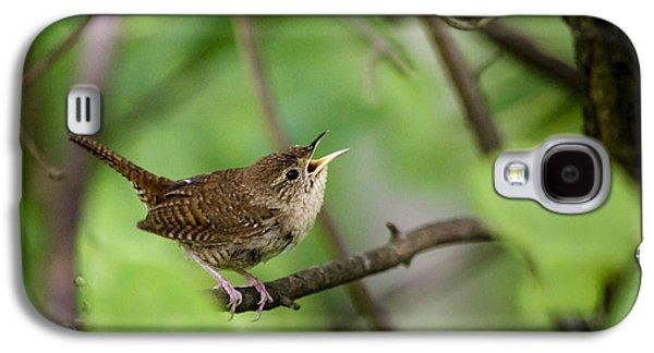 Wild Birds - House Wren Galaxy S4 Case by Christina Rollo