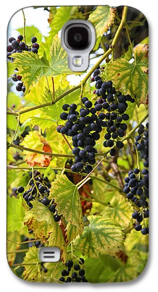 Wild Orchards Galaxy S4 Cases - Wild Grapes Galaxy S4 Case by Michael Hope