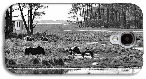 Dan Friend Galaxy S4 Cases - Wild horses of Assateague feeding Galaxy S4 Case by Dan Friend