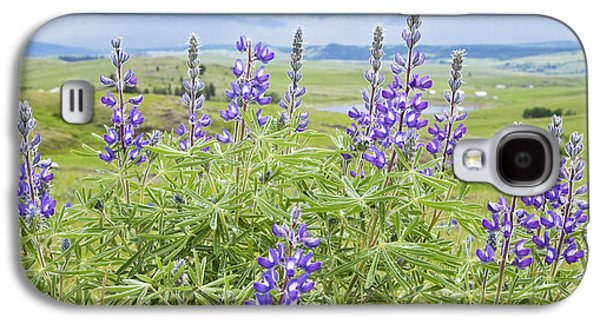 Pastureland Galaxy S4 Cases - Wild Lupine Galaxy S4 Case by Theresa Tahara