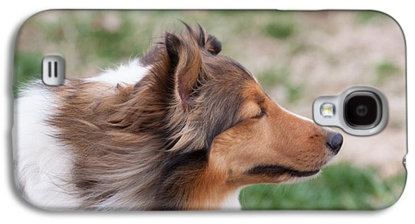 Dogs Pyrography Galaxy S4 Cases - Windy Dog Galaxy S4 Case by Sandra Middlebrook