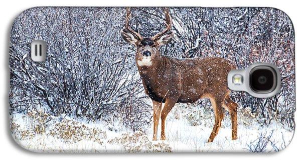 Winter Scene Galaxy S4 Cases - Winter Buck Galaxy S4 Case by Darren  White