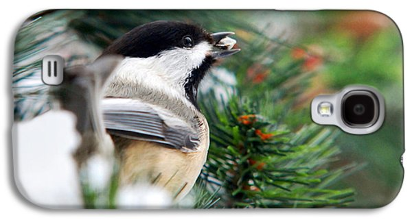 Winter Chickadee With Seed Galaxy S4 Case by Christina Rollo