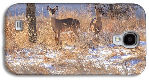 Grazing Snow Galaxy S4 Cases - Winter Deer Galaxy S4 Case by Jill Van Doren Rolo