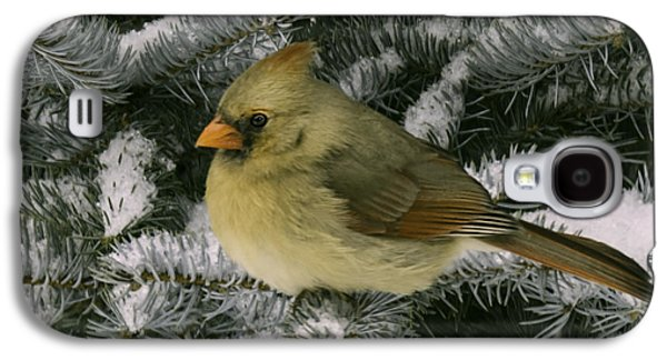 Wild Orchards Galaxy S4 Cases - Winter Female Cardinal in snow covered pine Galaxy S4 Case by LeeAnn McLaneGoetz McLaneGoetzStudioLLCcom