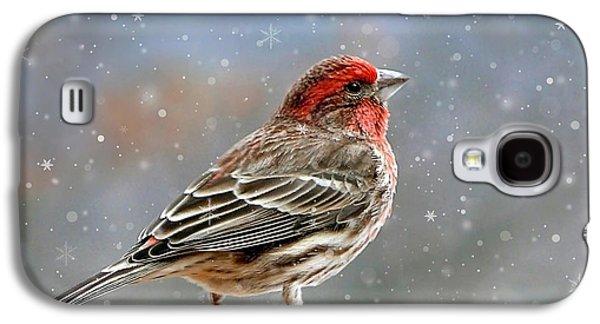 Rollo Digital Art Galaxy S4 Cases - Winter Finch Christmas Art Galaxy S4 Case by Christina Rollo