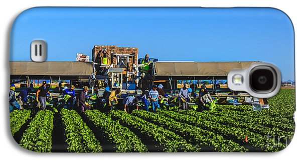 Romaine Galaxy S4 Cases - Winter Lettuce Harvest Galaxy S4 Case by Robert Bales