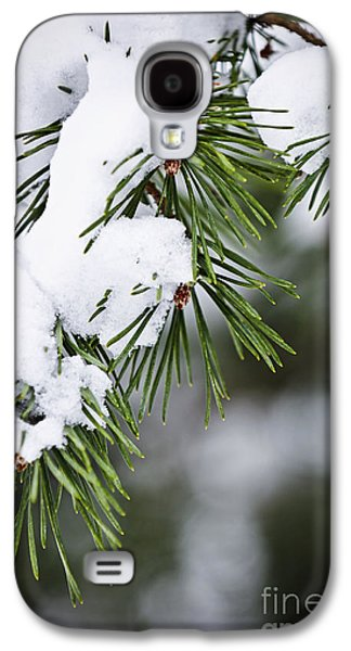 Winter Trees Photographs Galaxy S4 Cases - Winter pine branches Galaxy S4 Case by Elena Elisseeva