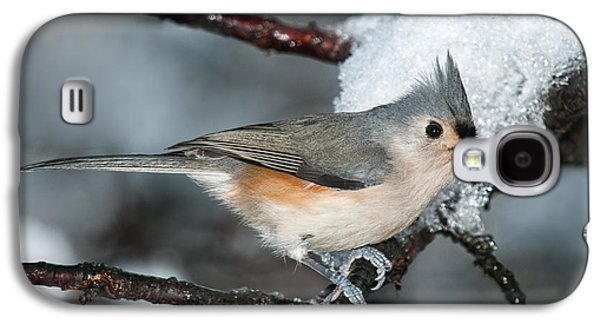 Tufted Titmouse Galaxy S4 Cases - Winter  Tufted Titmouse Galaxy S4 Case by Lara Ellis