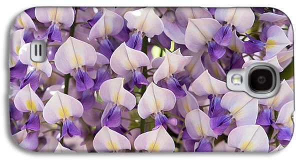 Floribunda Galaxy S4 Cases - Wisteria Floribunda Domino Galaxy S4 Case by Tim Gainey