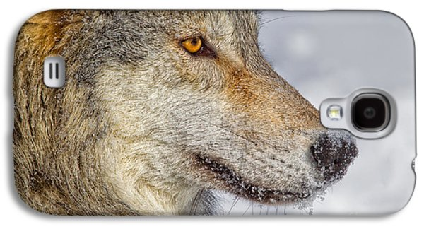 Canine Greeting Cards Digital Galaxy S4 Cases - Wolf Profile Galaxy S4 Case by Jerry Fornarotto