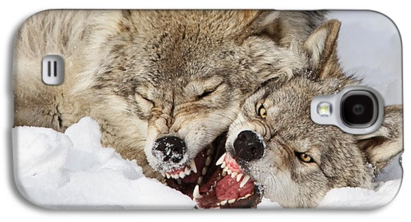 Crocks Galaxy S4 Cases - Wolves Rules Galaxy S4 Case by Mircea Costina Photography