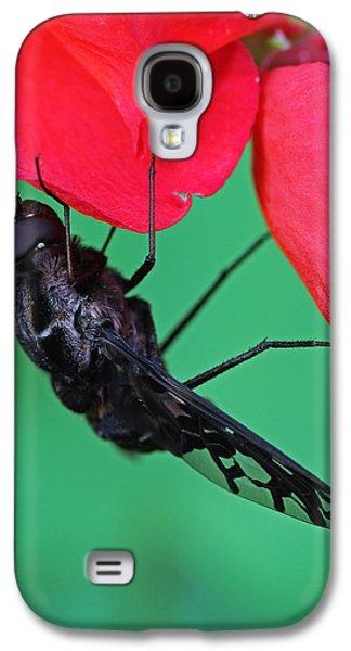 Morph Galaxy S4 Cases - Xenox Tigrinus Galaxy S4 Case by Juergen Roth