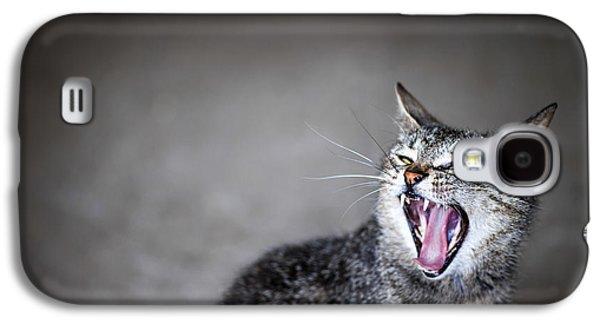 Gray Tabby Galaxy S4 Cases - Yawning cat Galaxy S4 Case by Elena Elisseeva