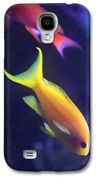 Underwater Photos Galaxy S4 Cases - Yellow and Pink Fish Galaxy S4 Case by Donna Corless