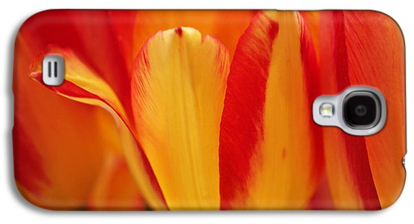 Botanical Galaxy S4 Cases - Yellow and Red Striped Tulips Galaxy S4 Case by Rona Black