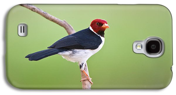 Wetlands Galaxy S4 Cases - Yellow-billed Cardinal Paroaria Galaxy S4 Case by Panoramic Images