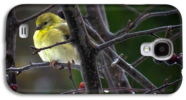 Yellow Finch Galaxy S4 Case by Karen Wiles