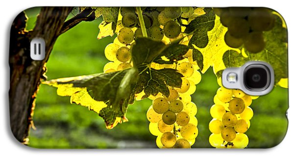 Wine Galaxy S4 Cases - Yellow grapes in sunshine Galaxy S4 Case by Elena Elisseeva