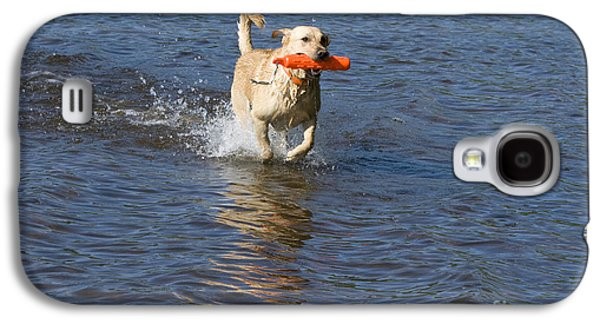 Water Retrieve Galaxy S4 Cases - Yellow Lab Retrieving Toy Galaxy S4 Case by Linda Freshwaters Arndt