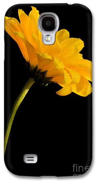Bloosom Galaxy S4 Cases - Yellow On Black Galaxy S4 Case by Nick  Boren