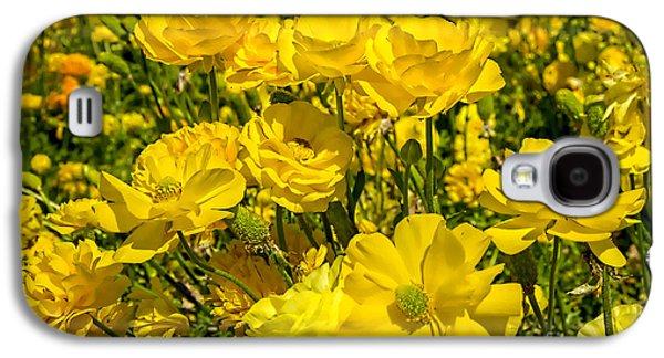 Keith Ducker Galaxy S4 Cases - Yellow Ranunculus 2 Galaxy S4 Case by Keith Ducker