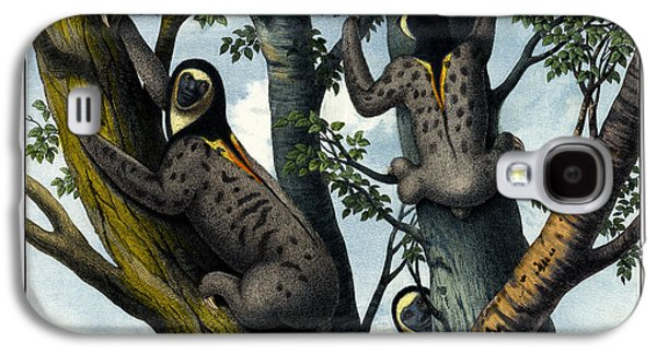 Sloth Drawings Galaxy S4 Cases - Yellow Throated Sloth Galaxy S4 Case by Splendid Art Prints