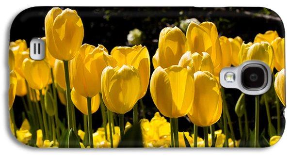 Cheekwood Galaxy S4 Cases - Yellow Tulip Attention Galaxy S4 Case by Paula Ponath
