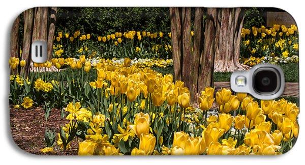 Cheekwood Galaxy S4 Cases - Yellow Tulip Pathway Galaxy S4 Case by Paula Ponath