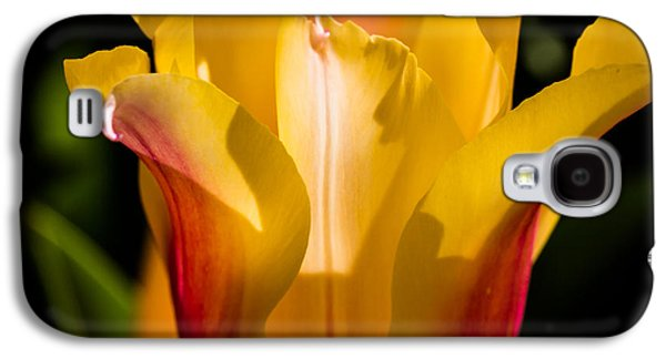 Cheekwood Galaxy S4 Cases - Yellow Tulip Galaxy S4 Case by Paula Ponath