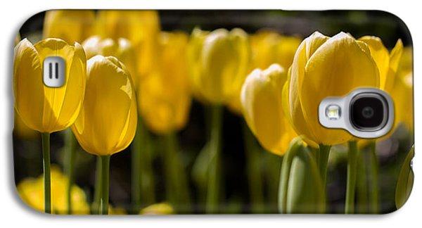 Cheekwood Galaxy S4 Cases - Yellow Tulips on Parade Galaxy S4 Case by Paula Ponath