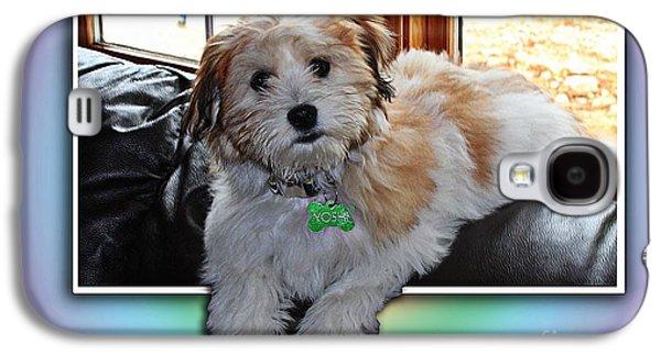 Puppies Digital Art Galaxy S4 Cases - YOSHI Havanese Puppy Galaxy S4 Case by Barbara Griffin