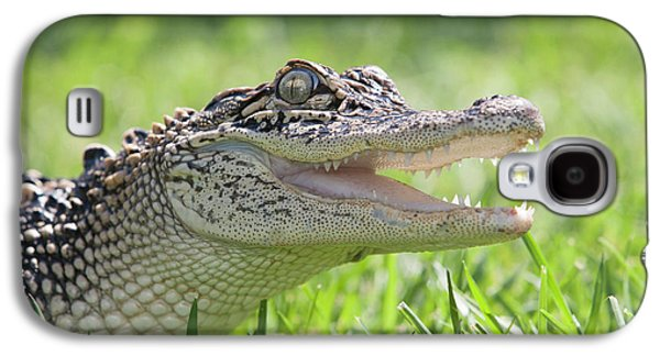 Young Alligator With Mouth Open Galaxy S4 Case by Piperanne Worcester
