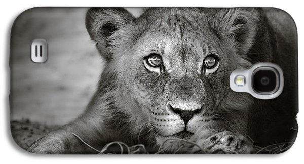 Leo Galaxy S4 Cases - Young lion portrait Galaxy S4 Case by Johan Swanepoel