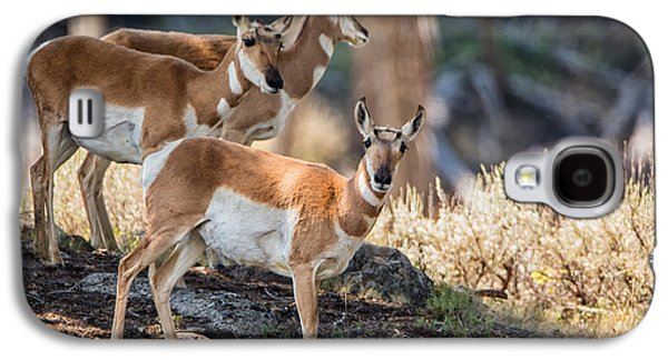 Mountain Photographs Galaxy S4 Cases - Young Pronghorn at Yellowstone Galaxy S4 Case by Andres Leon