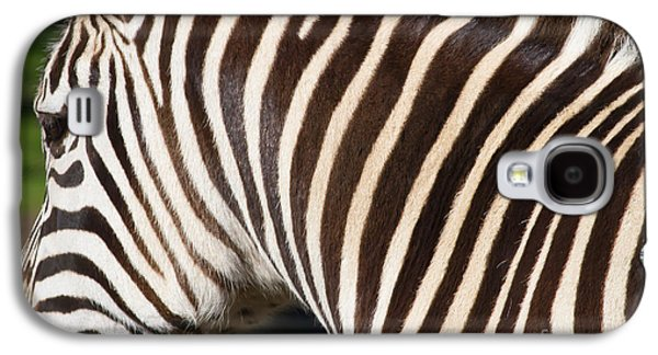 Harem Photographs Galaxy S4 Cases - Zebra 7D8894 Galaxy S4 Case by Wingsdomain Art and Photography