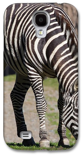 Harem Photographs Galaxy S4 Cases - Zebra 7D8972 Galaxy S4 Case by Wingsdomain Art and Photography