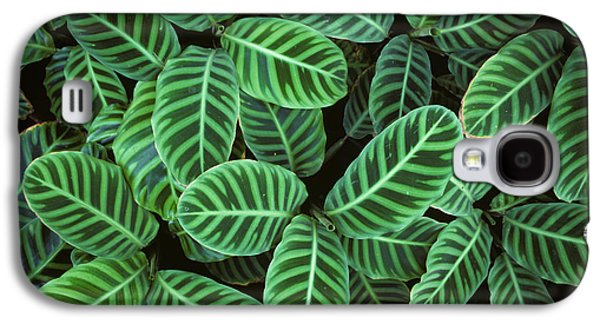 Symetry Galaxy S4 Cases - Zebra Plant Leaves Manila Philippines Galaxy S4 Case by Nigel Cattlin