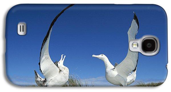 Wildlife Celebration Galaxy S4 Cases - Antipodean Albatross Diomedea Galaxy S4 Case by Tui De Roy