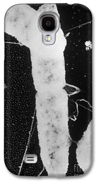 Tem Galaxy S4 Cases - Bacterial Conjugation, Tem Galaxy S4 Case by Anderson / Omikron